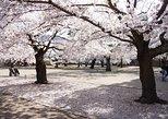Cherry Blossom and Snow Monkey Day Trip from Nagano. Nagano, JAPAN