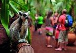 Oasis Wildlife Fuerteventura: Entrance Ticket & Lemur Experience. Fuerteventura, Spain