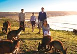 Adelaide, Kangaroo Island Tour de 5 dias com vinho Barossa Valley. Adelaida, Austrália