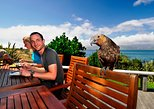 Kapiti Island Day Tour, Wellington, NUEVA ZELANDIA