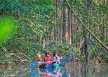 Recorrido de exploración en kayak de los manglares desde Puerto Jiménez. Puerto Jimenez, COSTA RICA