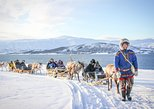 Reindeer Sledding Experience and Sami Culture Tour from Tromso. Tromso, NORWAY