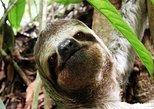 Manuel Antonio National Park One Day Tour, Quepos, COSTA RICA