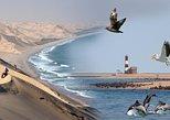 Marine Desert Adventure Full Day Tour from Walvis Bay. Walvis Bay, Namibia