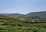 Douro Valley Tour with Visit to two Vineyards, River Cruise and Lunch at Winery. Oporto, PORTUGAL