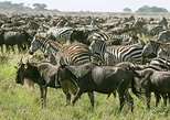 4 Days Join Group Tarangire Serengeti and Ngorongoro. Arusha, Tanzania