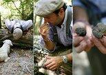 Orvieto: Half-Day Truffle Hunting Experience. Orvieto, ITALY