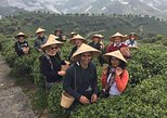 Private Tour-Yangshuo Seven Fairies Peak tea plantation and Xianggong hill, Guilin, CHINA