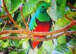 Recorrido a pie sobre la historia natural para grupos pequeños: Excursión por la mañana o por la tarde. Monteverde, COSTA RICA