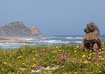 Recorrido turístico por Cape Point,