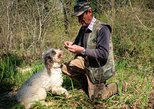 Private Truffle hunt in Tuscany from Florence. Chianti, ITALY