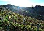 Durres, Cape of Rodon & Wine Tasting Tour, Tirana, ALBANIA