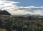 Beautiful Pohutukawa Coast - Half Day Private Tour, Auckland, New Zealand
