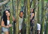 Excusión de medio día a El Yunque selvas tropicales desde San Juan,