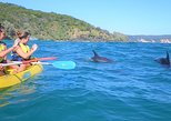 Noosa to Double Island Point Kayaking with Dolphins Day Trip. Noosa y Sunshine Coast, AUSTRALIA