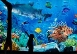 Sea Life Ocean World - Entrada solamente. Bangkok, TAILANDIA