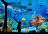 Sea Life Ocean World - Somente ingresso. Bangkok, Tailândia
