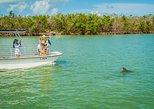 Recorrido de observación de delfines por Marco Island. Naples, FL, ESTADOS UNIDOS