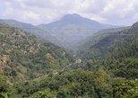 Excursión privada a las Montañas Azules. Ocho Rios, JAMAICA