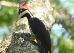 Excursión de observación de aves y naturaleza en Chaco. Asuncion , PARAGUAY