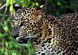Private Tour : YALA National Park with Experienced Driver/Guide. Parque Nacional Yala, Sri Lanka