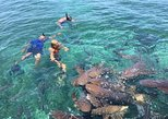 Hol Chan Marine Reserve and Shark Ray Alley Snorkeling Tour,