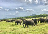 All Inclusive Private Safari in Minneriya National Park. Anuradhapura, Sri Lanka