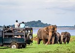 Jeep Safari To One Of a National Park Where You see Lot Of Animals On that day. Anuradhapura, Sri Lanka