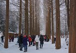 Premium Private Tour Nami Island & Petite France or The Garden of Morning Calm. Seul, South Korea