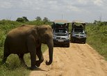 Private Tour: Bundala National Park Safari, Galle, Sri Lanka