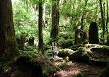 Yakusugi Cedar Forest Walking Tour on Yakushima Island. Kagoshima, JAPAN
