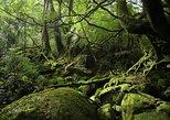 Shiratani-Unsuikyo Trekking Tour. Kagoshima, JAPAN