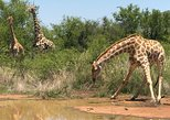 Safari to Pilanesberg the Gem of Africa,