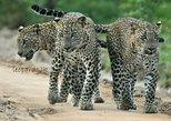 Special Leopard Safari Tour in Yala National Park by Malith & the team, Parque Nacional Yala, Sri Lanka