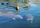 Swim and Snorkel with Manatees in a Guided Crystal River Tour, Crystal River, FL, ESTADOS UNIDOS