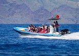 Avistamiento De Delfines, Ballenas, Tortugas Y Aves. Funchal, PORTUGAL