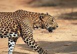 One Day Safari Tour to Both Yala and Bundala National Parks, Galle, Sri Lanka