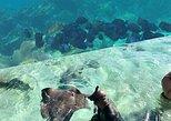 Esnórquel en jardín de coral por la ruta de tiburones y rayas. Ciudad de Belice, BELICE