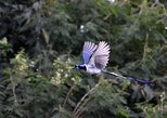 Sierra privada de Sierra Madre avistamiento de aves y senderismo. Mazatlan, MEXICO