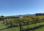 Marlborough Vineyard Discoverer, Nelson, New Zealand