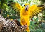 Bird Park & Iguassu Brazilian Side - Private Tour,