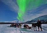 Northern Lights and Reindeer Sledding in Tromso. Tromso, NORWAY