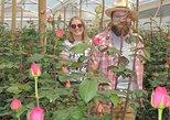 Rose Plantation, Equator Line and Otavalo Market Private Tour. Otavalo, ECUADOR