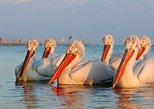Two-day Birding Trip: Cape Kaliakra & Srebarna Lake, Varna, BULGARIA