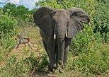 Las Cataratas Victoria de 5 días y el Parque Nacional Chobe desde Johannesburgo. Johannesburgo, SUDAFRICA