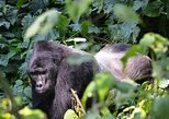 5 Days Gorillas and Wildlife Safari. Kampala, UGANDA