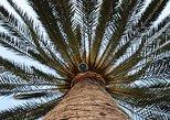 Audioguided visit inside the Ethnographic Park, La Gomera, Spain