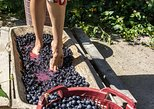 Florence to Chianti Private Grape Stomping Tour, Lunch, Pickup. Chianti, ITALY