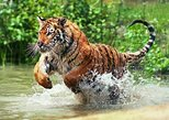 3-Day Ranthambore Wildlife Safari Tour from Delhi. Agra, India