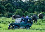 2 Days Tour to Mirissa Whale Watching & Udawalawe Safari From Bentota & Nearby- All Inclusive, Bentota, Sri Lanka